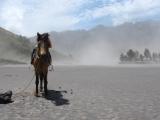 Am Fusse des Bromo gibt es ein Kloster und Pferde zu mieten um einen Teil des Aufstiegs zum Kraterrand getragen zu werden.