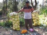 ...wo die erste Ernte des Tages bereits abgepackt zum Transport bereit steht.