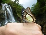 In der Naehe von Sapa liegt Cat Cat, wo wir auf handzahme Schmetterlinge treffen