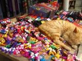 Bewacht nun die Katze die Auslage, oder ist sie auch zum kaufen da?