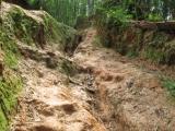 Das ist der Weg zu Mama-Tee's Haus. Quer durch den Bambuswald
