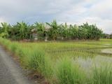 Sammy's Kochschule ist mitten in den Reisfeldern, versteckt hinter Palmen.