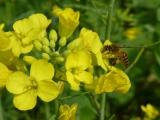 Ja, ja! Auch in China gib es fleissige Bienen ;-)