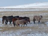 Wilde Pferde 1