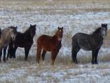 Wilde Pferde 2