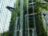 Im Nebelwald Dome stuerzt aus hoher Hoehe ein Wasserfall