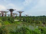 Auch ausserhalb der Domes gibt es etliches zu bestaunen, wobei uns die Supertrees von nahe beeindrucken...