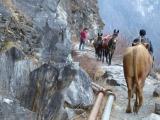 Am Morgen des 2. Tages: Tierischer Gegenverkehr auf dem schmalen Weg der in die steilabfallende Felswand enschlagen wurde