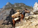 Oben angekommen erwartet uns ein mit Brenholz beladenes Pferd