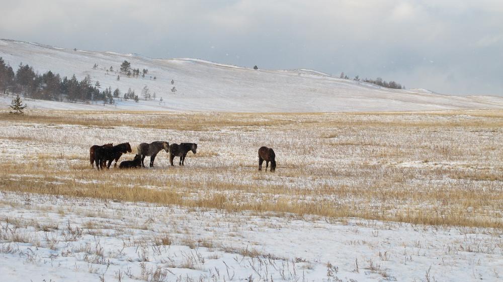 Wilde Pferde kreuzen unseren Weg_IMG_8031