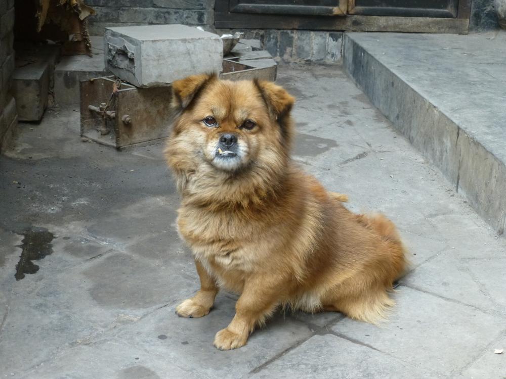 und der bissige Wachhund_P1010356