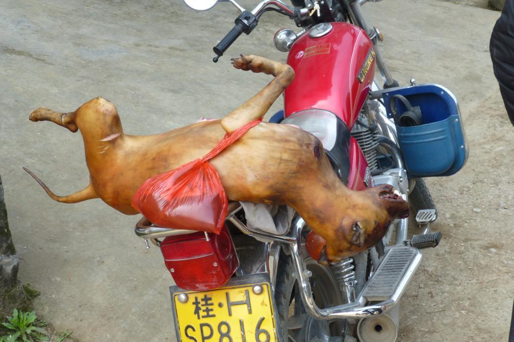 Der gegrillte Hund_P1010802