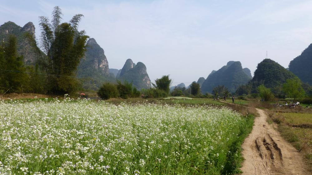 auf der Schotterpiste zurück nach Yangshuo_P1010873