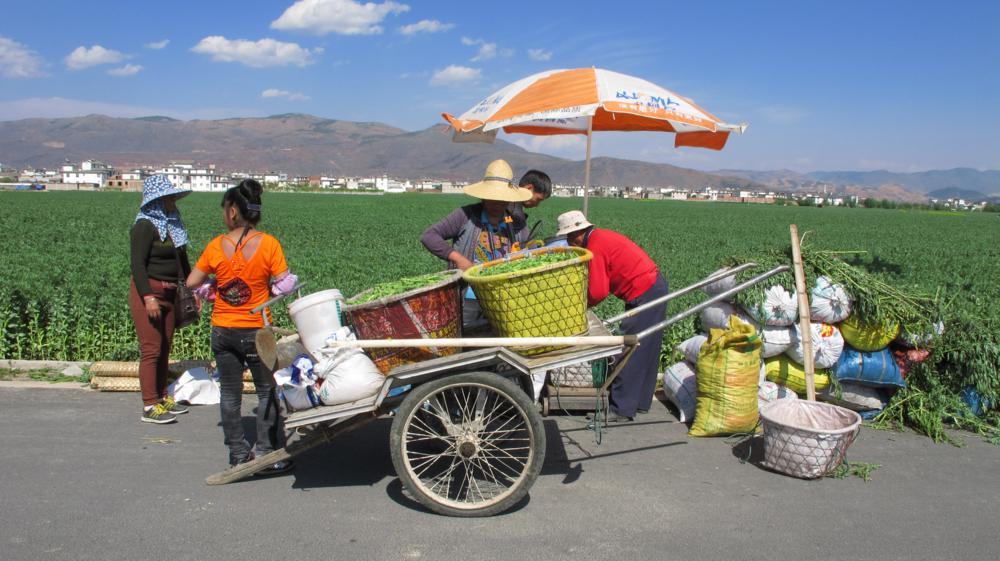 Bauern liefern die Bohnen zentnerweise an_IMG_0977