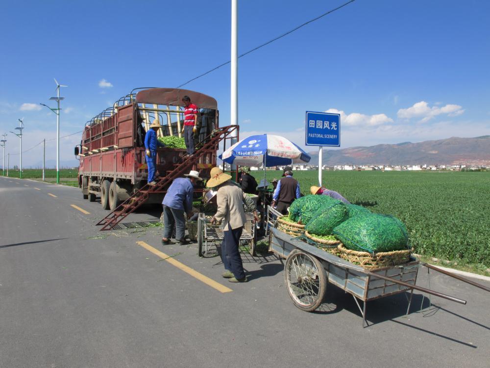 Ein Einkäufer mit grossem Lastwagen inmitten der Saubohnenfelder_IMG_0965
