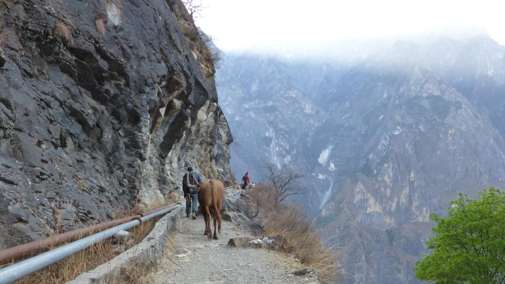 wir teilen uns den Weg mit Bauern, Rind und Ziegen_P1020835_1000x563