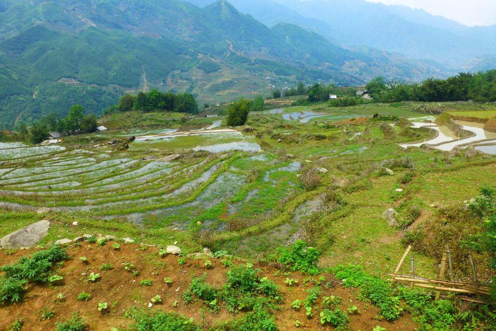 Wanderung durch Reisterrassen..._P1030199