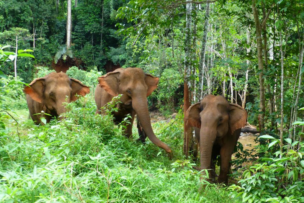 3 der Elefanten vom ELIE-Project_P1040911