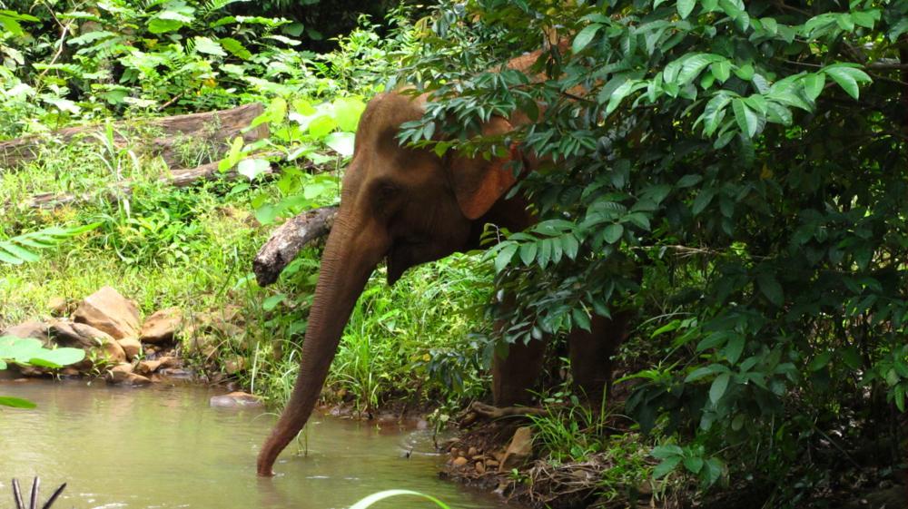 Elefant sein macht Durst_IMG_4261