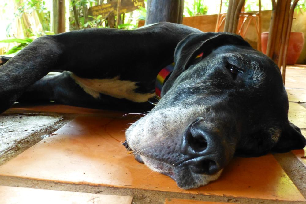 Ja und so viele Eindrücke machen müde und so geniessen wir wie das Hundchen das relaxte Kambodscha_P1050039