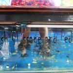 Massierende Fische in Siem Reap