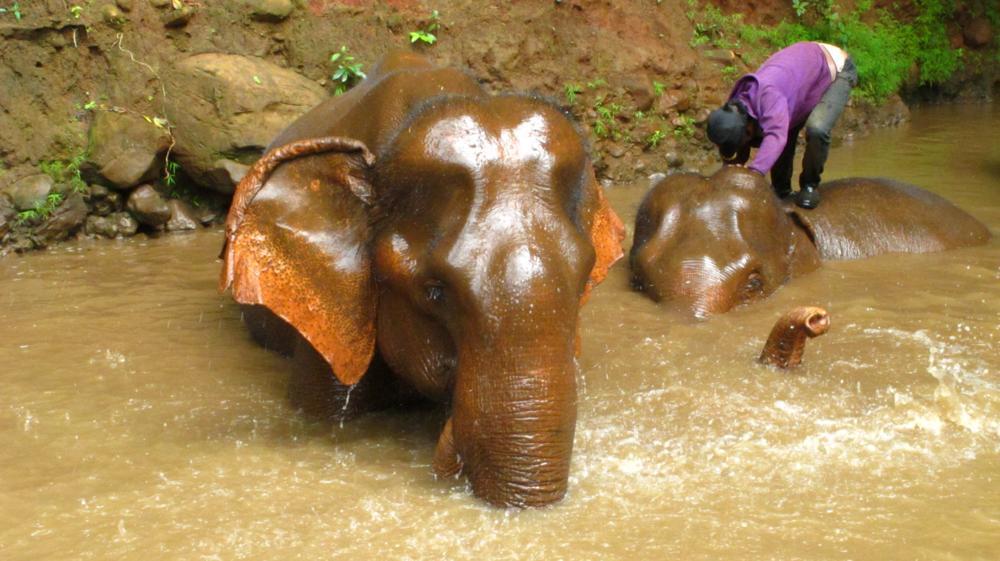 So sehen glückliche Elefanten aus_IMG_4341