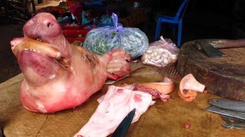 glückliche Schweine..._IMG_4657
