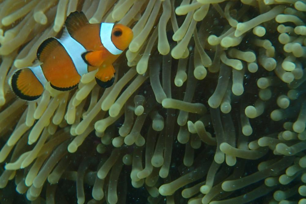 Unser Freund Nemo_P9231540