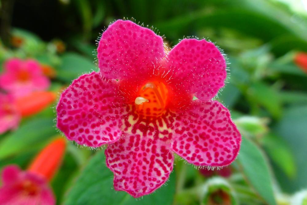 Farbenfrohe Blütenpracht im Flowerdome_P1070752